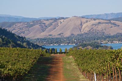 Vineyards, lake, mountains