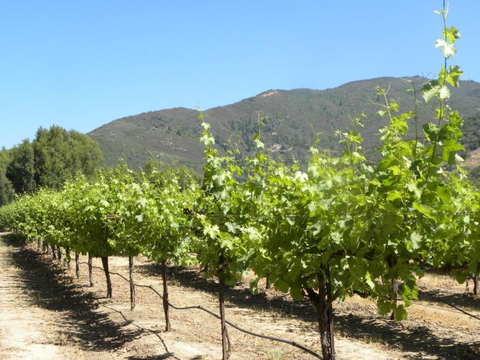 Schlies vineyard