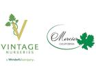 Vintage Mercier Logo