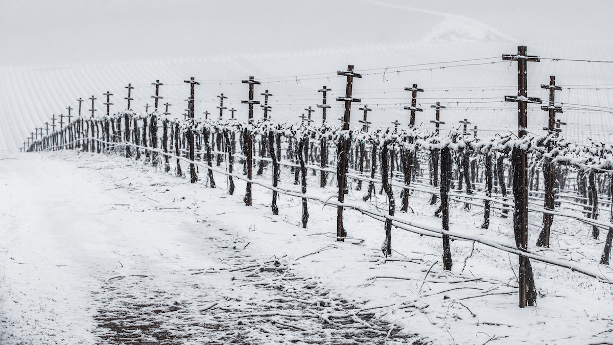 Snow in Vineyard by Nathan DeHart