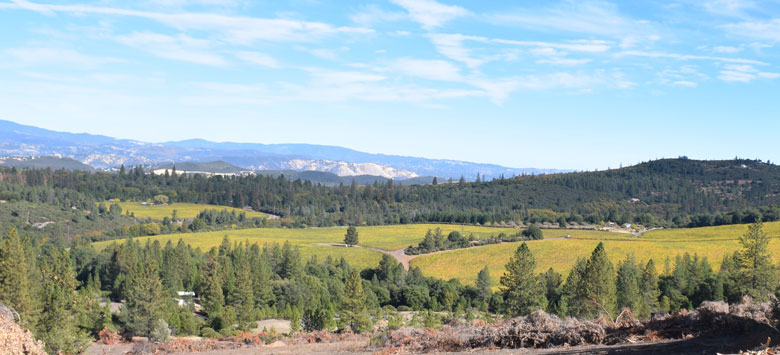 Lake County vineyards, trees, mountains, Courtesy of Wines & Vines