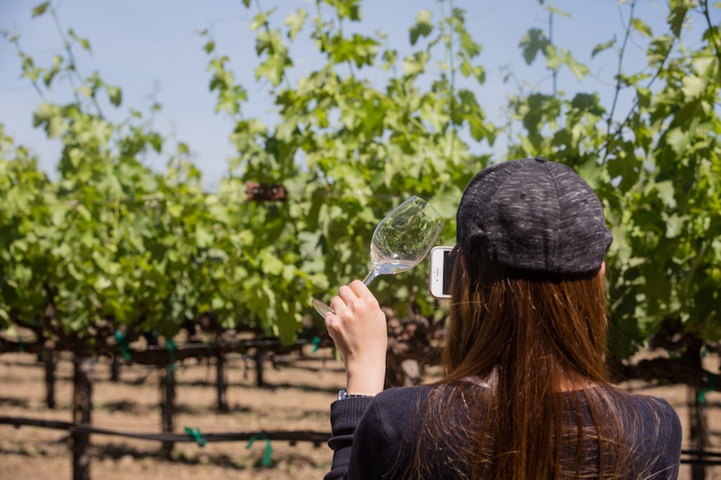 SOMM Camp guest taking photo of her glass in the vineyard