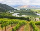 Vigilance Vineyards by Nathan DeHart