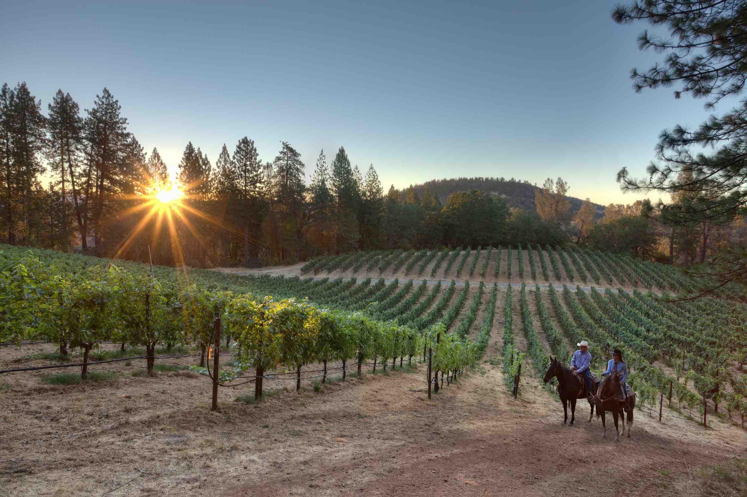 Mitch and Tracey Hawkins on horseback in vineyard