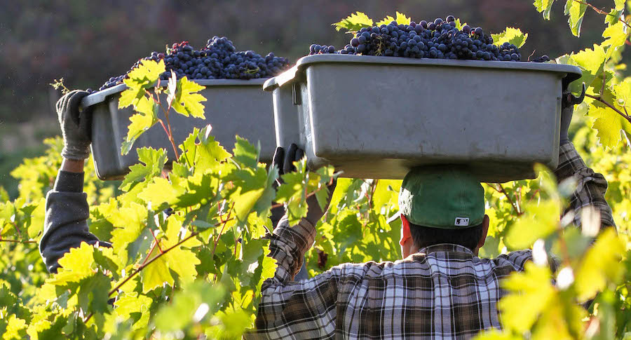 December 2018 LCWC Grower eNews banner, vineyard workers carrying tubs of red winegrapes through vineyard