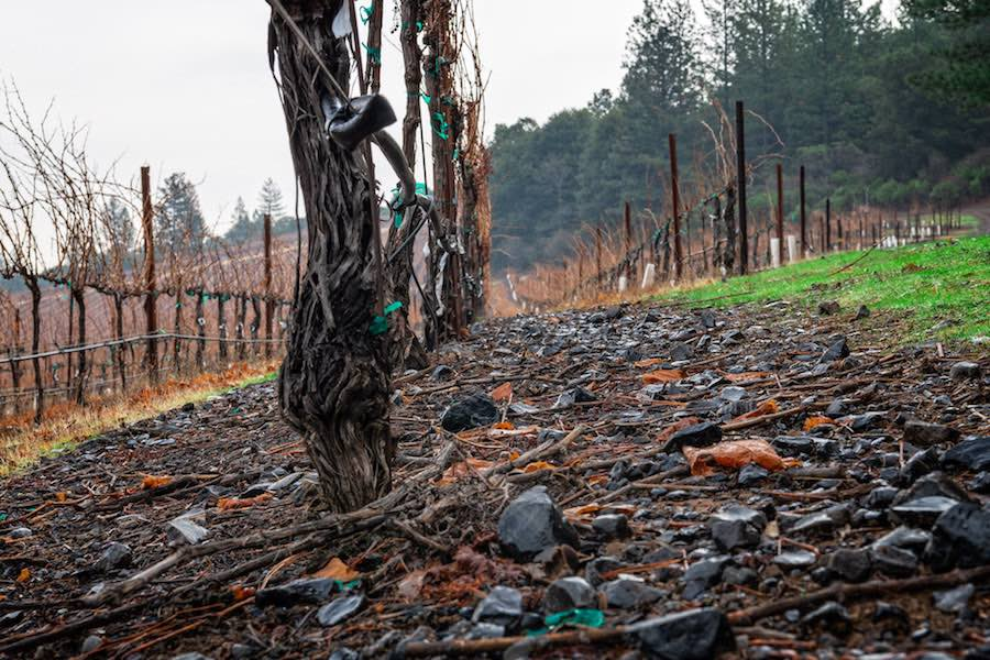 "Vines and rocks, Lake County, Calif., Wine Enthusiast ""Volcanic California,"" Credit Michael Housewright"