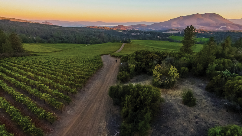 Vineyards, mountain, and trees, Lake County, Calif, Beverage Media Group