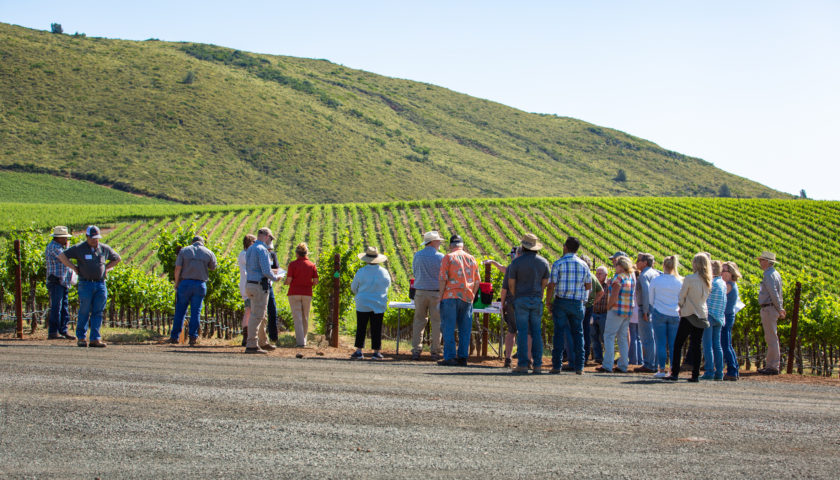 Implementing Sustainable Farming Practices workshop in the vineyard
