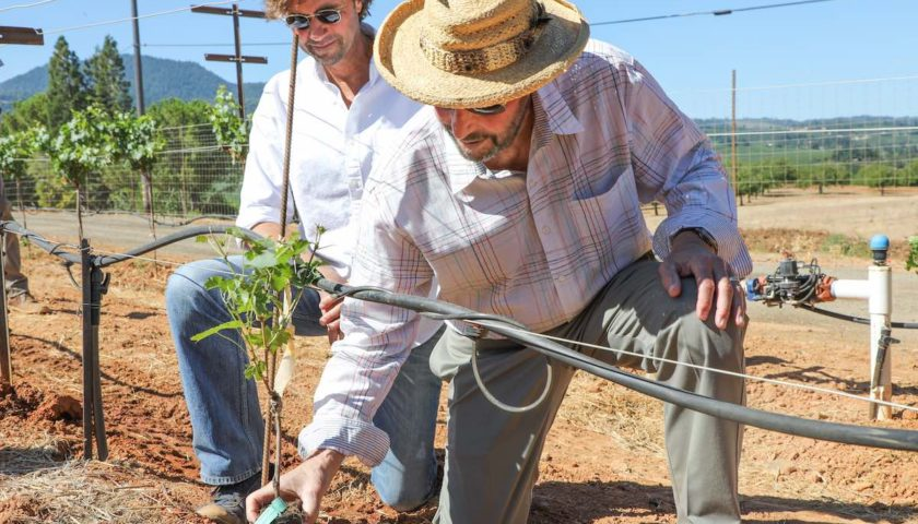 Andy Beckstoffer and David Beckstoffer Plant 1.5 Millionth Vine in Red Hills Lake County, CA
