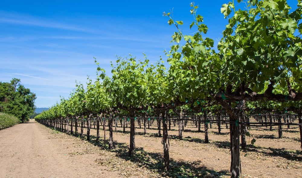 Lake County vineyards and blue sky, by Nathan DeHart