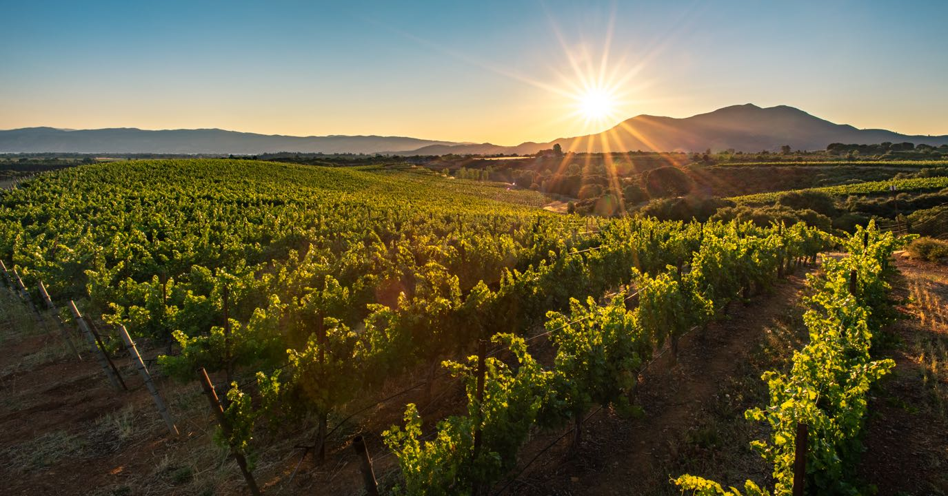 Vineyards in Lake County with mountain and sunburst by Nathan DeHart