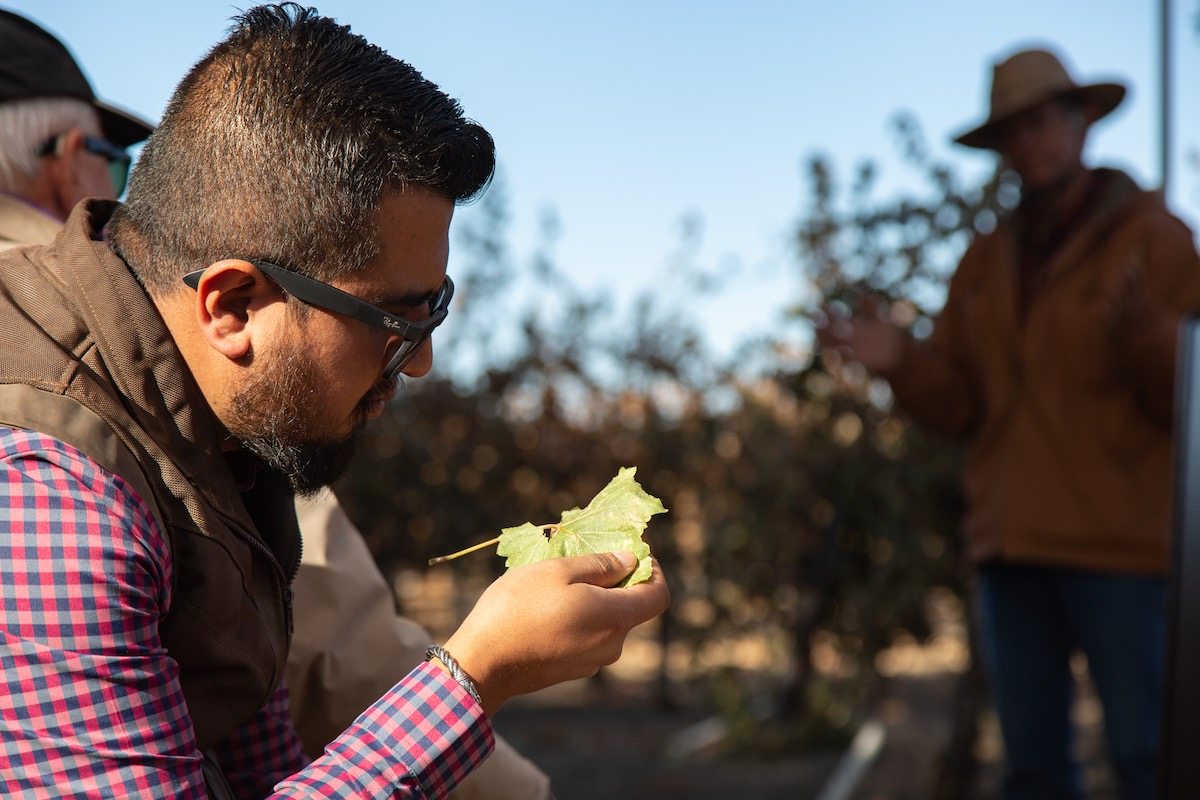 Person examining a winegrape leaf at a 2019 Lake County taillgate event