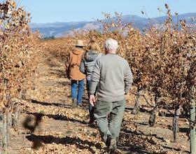 Group walking through vineyard