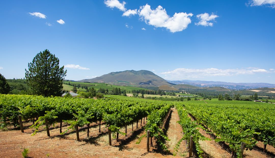 Lake County vineyards with Mt. Konocti in the background by Nathan DeHart