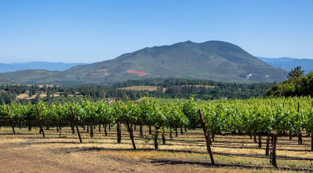 Mt. Konocti and vineyards in Lake County by Nathan DeHart