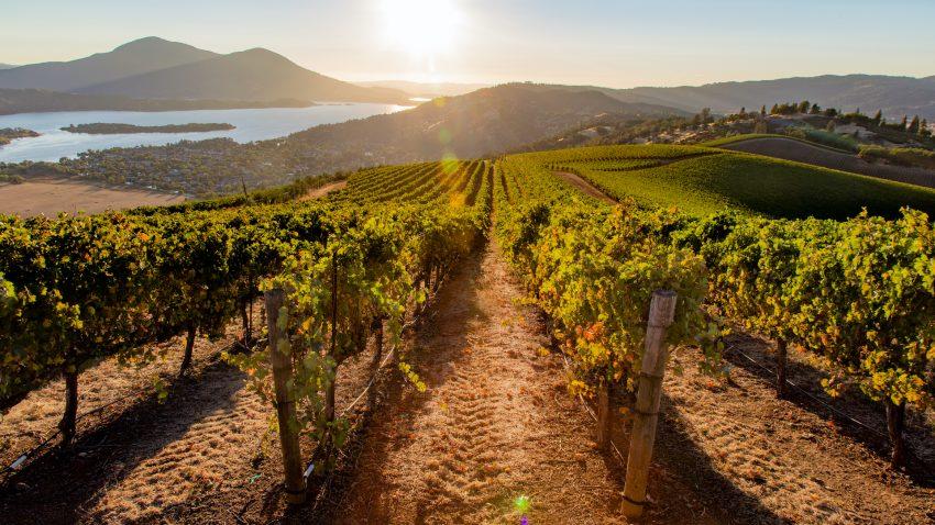 Lake-County-vineyard-sunset-by-Nathan-DeHart