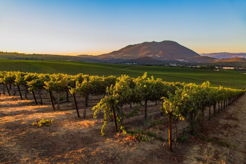 Lake County vineyards growing on volcanic soils